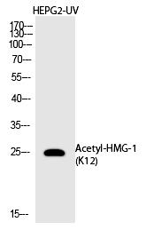 HMG-1 (Acetyl-Lys12) Polyclonal Antibody - Absci