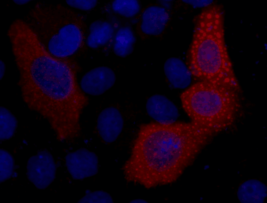 VSV-G-Tag Mouse Monoclonal Antibody - Absci